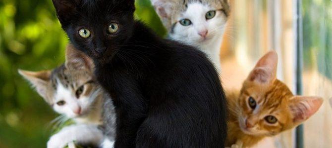 Почему не бывает чисто чёрных кошек?